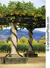 Vineyard Napa in California. - Vineyard in the wine growing...