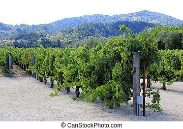 Vineyard of Napa in California.