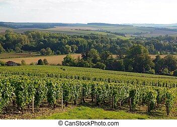 Vineyard of the hillsides,, Chablis
