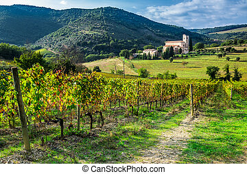 Vineyard on a background the monastery in Tuscany