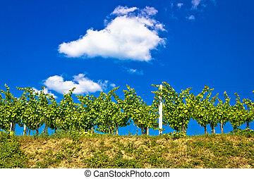 Vineyard on hill summer view