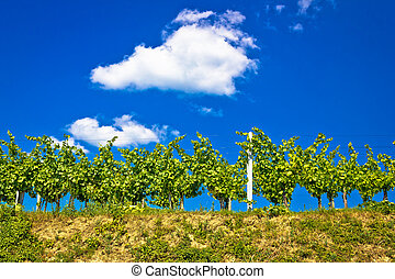 Vineyard on hill summer view, Prigorje region of Croatia
