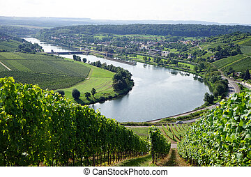 Vineyard on the river