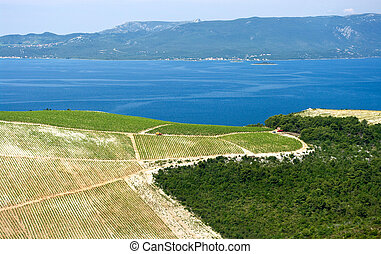 Vineyard on the seashore in Croatia