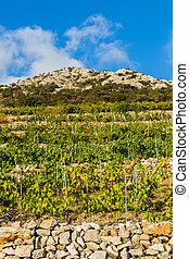Vineyard on the southern slopes of the Peljesac peninsula