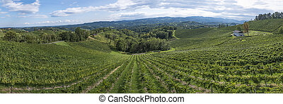 Vineyard on the vine route in south Styria in Austria