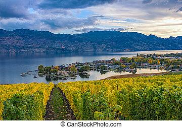 Vineyard Overlooking Okanagan Lake Kelowna BC Canada -...