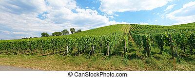 Vineyard panorama