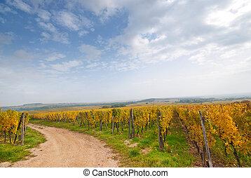 Vineyard road, Germany