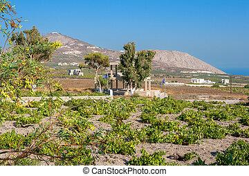 vineyard., santorini eiland, griekenland