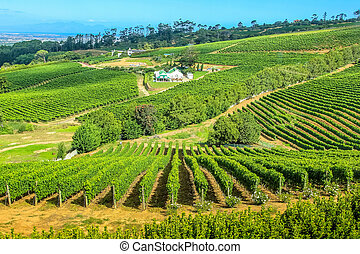 Vineyard South Africa - Drone view of vineyards in Cape Town...