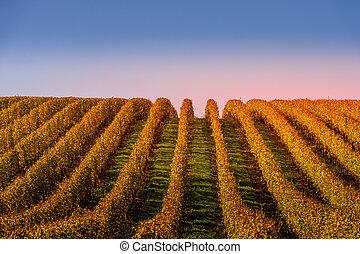 Vineyard sunrise bordeaux vineyard france