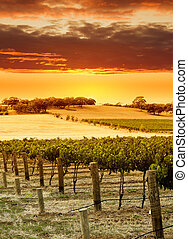 Vineyard Sunset