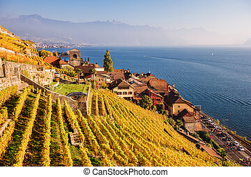Vineyard terraces at Lake Geneva in autumn, Lavaux, Vaud,...