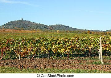 Vineyard under hill landscape autumn season