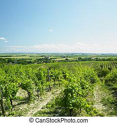 vineyard, Unterretzbach, Austria