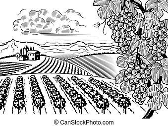 Vineyard valley landscape black and white - Retro vineyard...