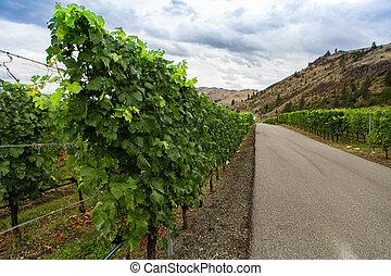 vineyard vine grape line on asphalt road