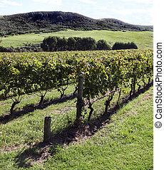 Vineyard Waiheke Island New Zealand
