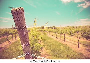 Wine vineyard with vintage tone