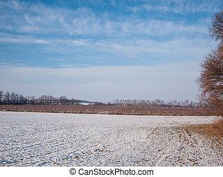Vineyard winter scene