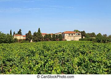 Vineyard with beautiful house