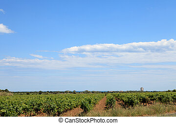 Vineyard with beautiful sky and clouds
