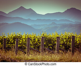 Vineyard with misty mountain background - View of vineyard...