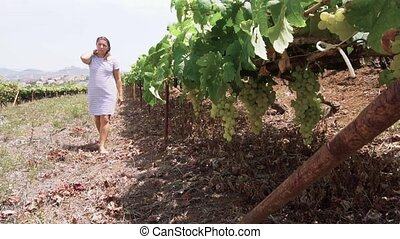 Vineyard with red grape - Woman walking along vine rows and...