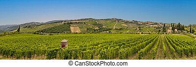 vineyard with ripe grapes in Greve in Chianti