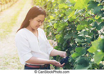 Vineyard worker checking wine grapes in vineyard