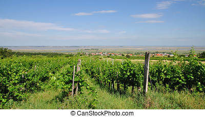 Vineyard,Neusiedler See,Austria - Vineyard at Lake...