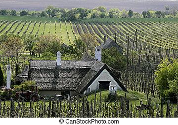 Vineyards and farm house near Aszof? at Lake Balaton, Hungary,