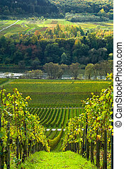 vineyards and forest along the mose riverl in germany