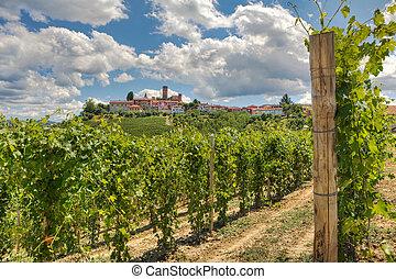 Vineyards and small town. Castiglione Falletto, Italy. -...