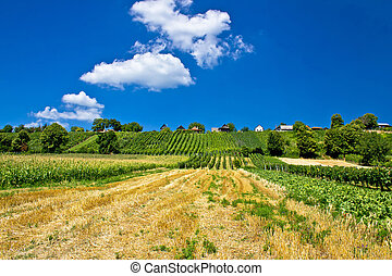 Vineyards and traditional cottages on green hill of Kalnik...