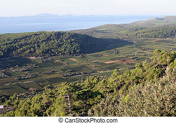 Vineyards at Smokvica village. This place is famous for the quality of the Posip and Rukatac wine , island of Korcula, Croatia.