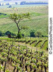 vineyards, Burgundy, France - vineyards of Cote Chalonnaise...