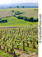 vineyards, Burgundy, France