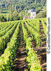 vineyards, Burgundy