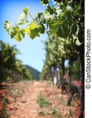 California vineyards in sonoma valley against blue sky