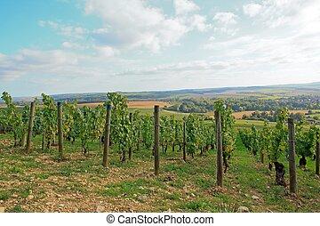 Vineyards, Chablis Burgundy France