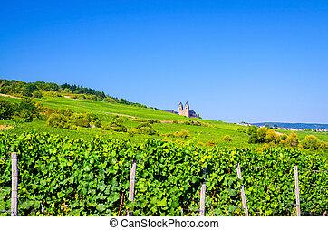 Vineyards green fields landscape with grapevine rows and Eibingen Benedictine Abbey of St. Hildegard on hills, river Rhine Valley, Rheingau wine region near Rudesheim town, State of Hesse, Germany