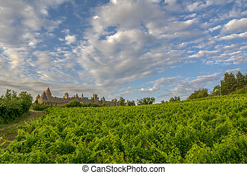 Vineyards growing outside the medieval fortress of Carcassonne in France at sunset