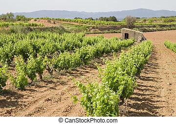 Vineyards in Catalonia - Vineyards in Montferri ( Alt Camp...