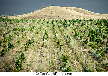 vineyards in Crimea