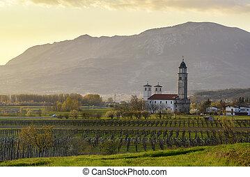Vineyards in early spring - Rural landscape with vineyards...