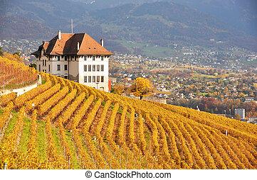 Vineyards in Lavaux region, Swittzerland