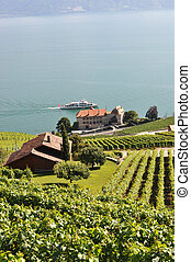 Vineyards in Lavaux region, Switzerland