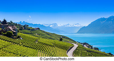 Vineyards in Lavaux region - Terrasses de Lavaux terraces, Switzerland